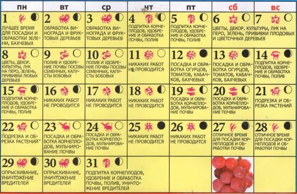 Календарь посадки баклажан: полезные советы