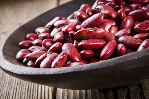 Особенности выращивания фасоли, выбор сорта