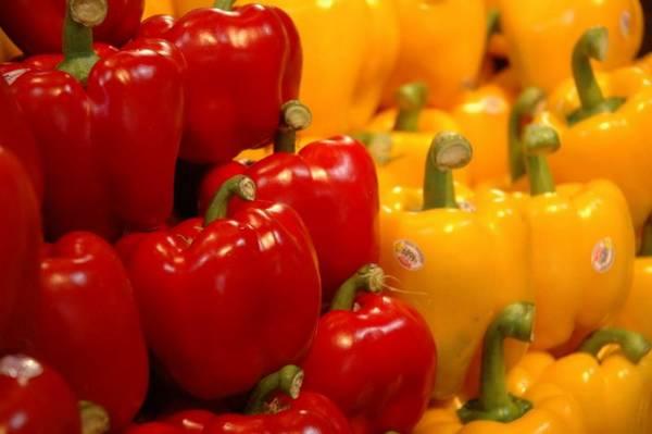 Главные болезни сладкого перца и борьба с ними