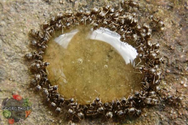 Как избавиться от муравьев на дачном участке  лучшие способы и методы, эффективная борьба