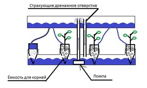 Выращивание зелени в гидропонной установке